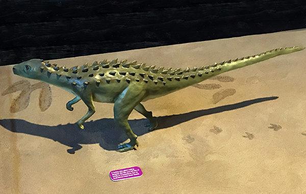 Scutelllosaurus Model